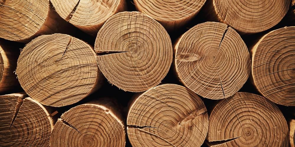 Aktien zu Holzwirtschaft