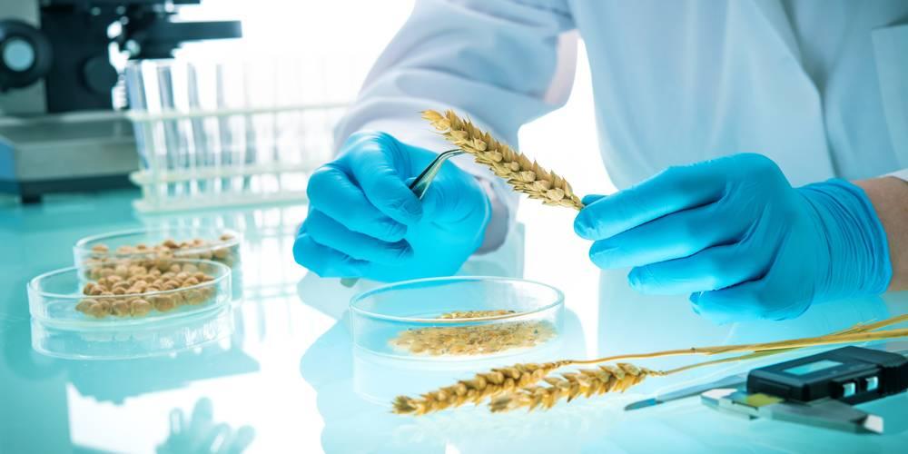 Aktien zu Nahrungsmitteltechnik