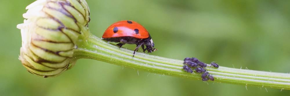Aktien zu Biological-Pflanzenschutz